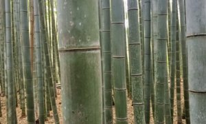 How to visit the Kyoto Bamboo Forest (with detailed directions)
